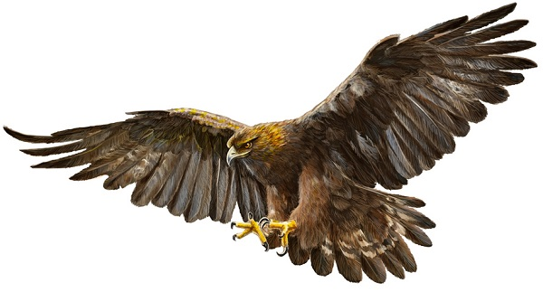 Aves rapaces - águila real